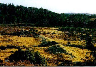 Duack Sawmill remains