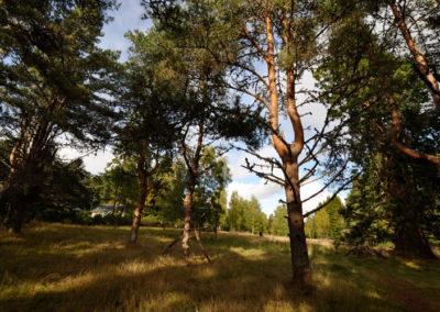 Tree Nursery 1
