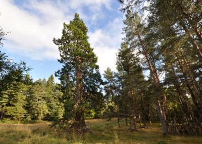 Tree Nursery 2